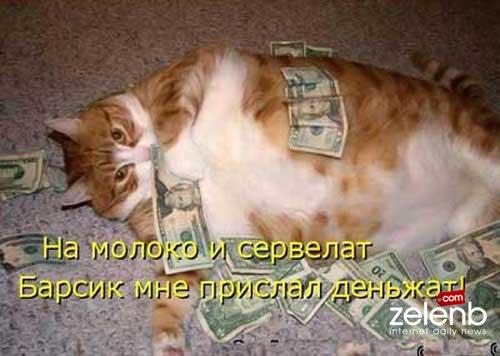 И котята с прикольными надписями